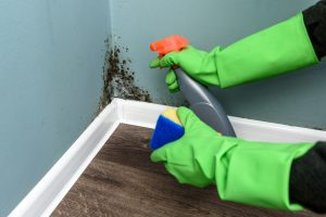 Mold_removal_Cleaning_Black_Gloves_Protection_Remediation