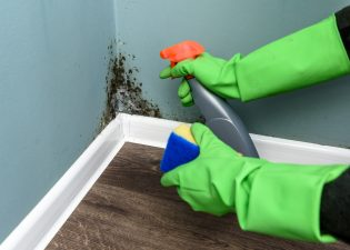 What You Need To Know About Mold Removal