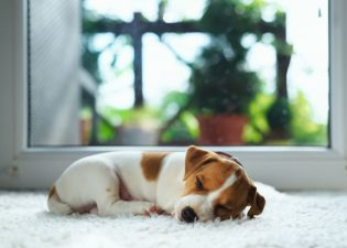 Proper Pet Urine Treatment for Carpet Cleaning